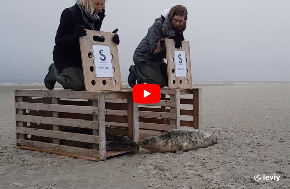 Leviy-Seal-4-february